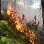 Aydos ormanında alevler yükseliyor
