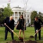 Trump'la birlikte dikmişlerdi! O meşe fidanı kurudu!