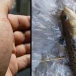 2 kişiyi zehirleyen balık Bursa'da oltaya takıldı
