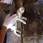 Açlıktan bayılan kediyi kalp masajı ve suni teneffüsle kurtardı