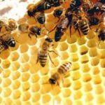Arı soktu hayatını kaybetti!