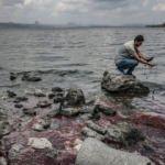 Bakanlıktan balık ölümleri açıklaması