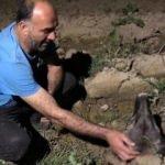 Bursa'da köpeğine araç çarpan kişi gözyaşlarına boğuldu