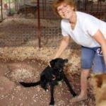 İngiliz emekli öğretmen 33 sokak köpeğine bakıyor