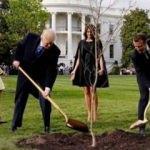 Macron ve Trump'un diktiği ağaç kurudu