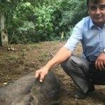 Yaralanan domuzu tellerden kurtararak doğaya saldılar