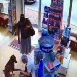 Yaralı köpek eczacıdan böyle yardım istedi
