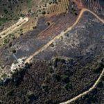 Muğla'da 5 hektar alan küle döndü