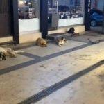 Sokak köpekleri dehşet saçtı!