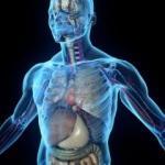 Vücudun ihtiyaç duyduğu besinler nelerdir? İşte insan sağlığına faydası olan besinler...