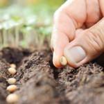 Yerli ve milli tohumlar tanıtıldı