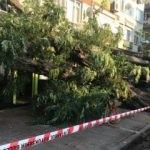 Beşiktaş'ta devrilen ağaç yürekleri ağza getirdi