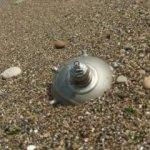 Deniz mayını tetikleyicisi sahile vurdu