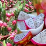 Ejder meyvesi nedir? Ejder meyvesinin faydaları nelerdir? Hangi hastalıklara iyi gelir?