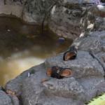 Süs havuzunda dehşet! İki çocuk ağır yaralandı