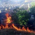 Pakdemirli'den orman yangınları ile ilgili son dakika açıklaması