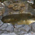 Süs havuzunda elektrik akımına kapılan Yağmur yoğun bakımda