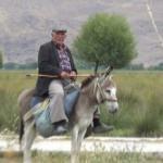 78 yaşında olmasına rağmen çobanlık yapıyor