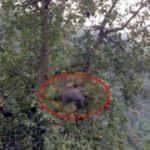 Armut toplamaya çıktığı ağaçta feci şekilde can verdi!