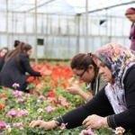 """Çiftçiye alım garantili """"süs bitkisi"""" desteği"""
