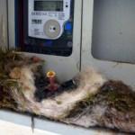 Elektrik saatinde sürpriz: Onlar için elektriği açmıyor