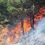 ODTÜ'yü ayağa kaldıranlar PKK'nın ağaç katliamına sessiz