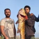 Kars'ta oltaya dev balık takıldı