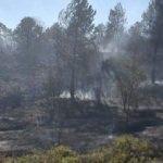 İstanbul'da ormanlık alanda yangın!