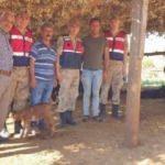 Kaybolan hayvanlar drone ile bulundu