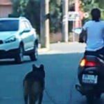 Köpeğini motosiklete bağlayan kadın kendini böyle savundu!