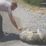 Sıcakta bayılan köpek tedavi altına alındı