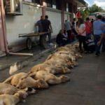 Eyüpsultan'da şehitler için 53 kurban kesildi