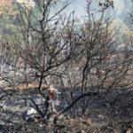 Kahramanmaraş'ta yangın: Havadan ve karadan müdahale ediliyor