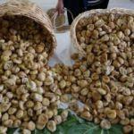 Sezonun ilk kuru incirine 100 liralık sembolik fiyat