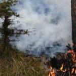 Sinop'ta ormanlık alanda yangın