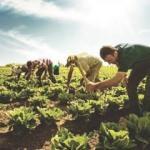 ABD-Çin çekişmesi Türk çiftçilere yarar