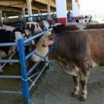 Canlı hayvan ithalatı yüzde 63 azaldı