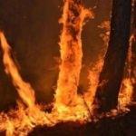 Eskişehir'de yangın! Kontrol altına alındı