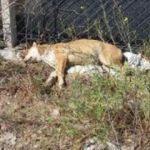 Et yiyerek zehirlenen 3 köpek öldü