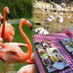 Flamingo köy nerede? Nasıl gidilir? Fiyatları hakkında bilgi...