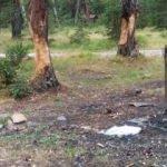 Ormanın içler acısı hali: Piknikçiler mangal için ağaçlara zarar verdi