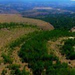 Sadece Kütahya'da 5 milyon ağaç: Maden sahaları es geçilmiyor