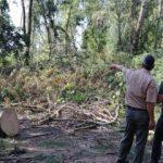 Sit alanında ağaç kesimi yapanlar fotokapan ile yakalanacak