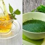 Isırgan Otunun faydaları & zararları: Doğal Isırgan otu çayı ne işe yarar?