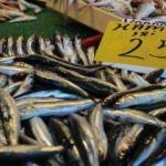 Av yasağı kalktı: Fiyatlar yüzde 50 düştü