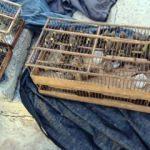 Bu kuşlarla yakalandı, öyle bir ceza yedi ki...