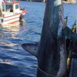 Marmara'da yakalandı! Balıkçıların zor anları kamerada
