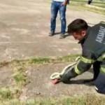 Çocuk parkında ortaya çıkan yılan korkuttu