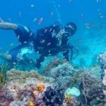 Dünyanın en iyi 10 dalış rotası