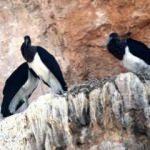 Salda Gölü'nde şaşırtan görüntü! Bilim insanları takibe aldı